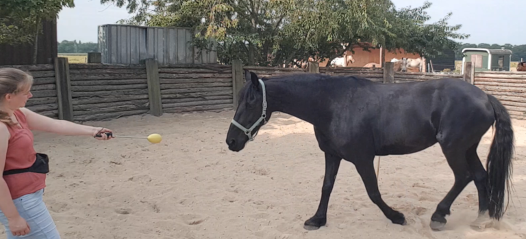 target clickertraining met fries paard