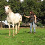 rijden met de clicker paard trainen