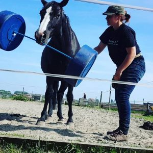 paard fit overgewicht clickertraining