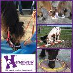 hersenwerk voor paarden