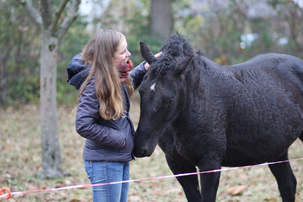 Paardentraining voor grondwerk en gedragsproblemen