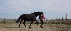 je paard fit houden met clickertraining