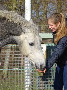 jouw paard bij mij in opleiding