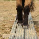 pony balans evenwichtsbalk vrijheid liberty grondwerk