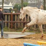 paard grondwerk training balans positieve bekrachtiging