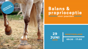 balans proprioceptie instructie paard