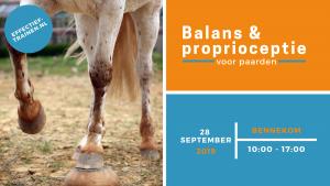clinic paard grondwerk balans proprioceptie positieve bekrachtiging