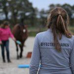 les clickertraining positieve bekrachtiging paard gelderland overijssel utrecht