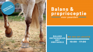 clinic positieve bekrachtiging clickertraining balans proprioceptie workshop