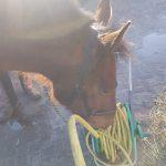 Cees leert op eigen tempo de tuinslang te verkennen