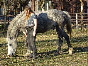 Het einde van een sessie clickertraining met je paard goed afsluiten