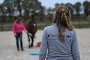 les aanbod effectief trainen paardentraining grondwerk