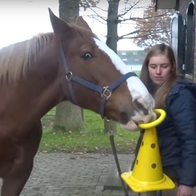 kunstjes aan je paard aanleren