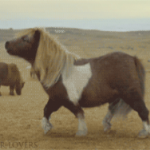 zijn paarden muzikaal