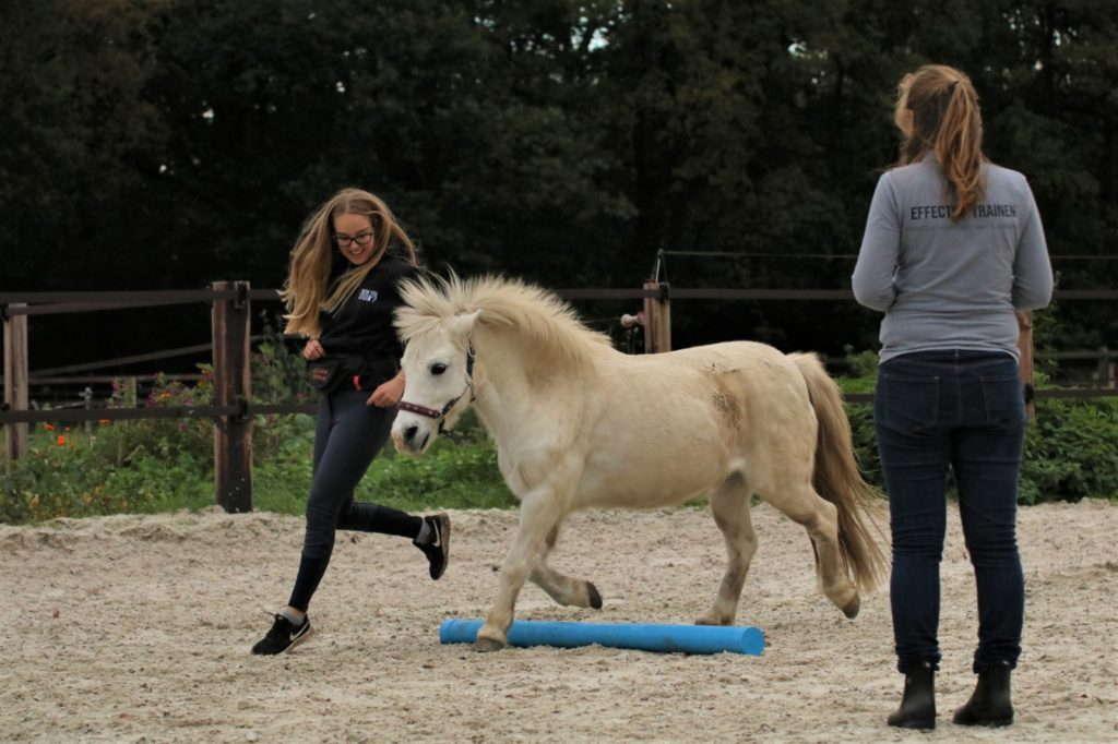 samen met je paard