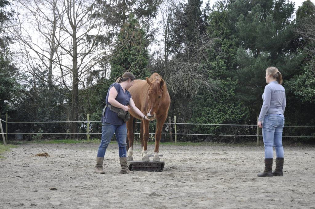 les clickertraining noord-brabant grondwerkles met je paard