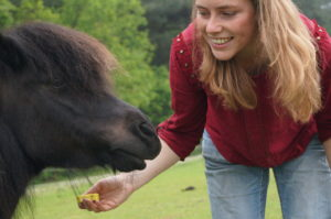 Clickertraining of natural horsemanship