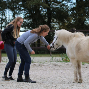 timing clickertraining paard