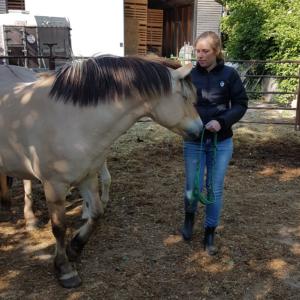 paard voetje geven