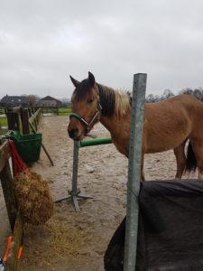 jong paard leren trailerladen