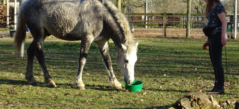 Begin- en einde sessie signalen bij het werken met positieve bekrachtiging met paarden
