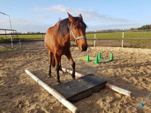 paard met clickertraining leren ergens op te staan