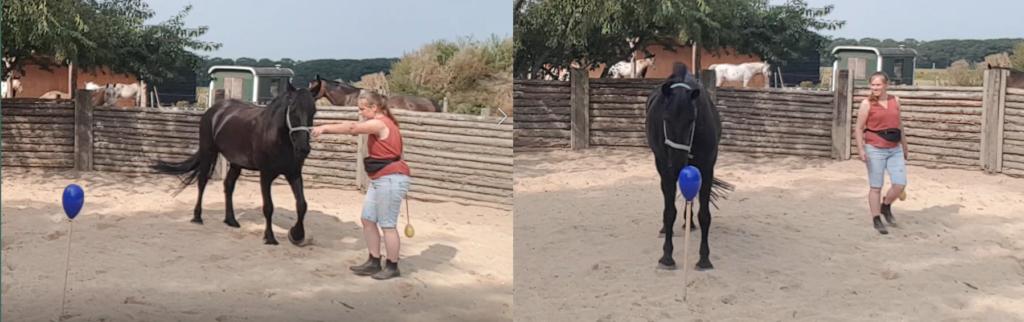 paard naar stationary target sturen