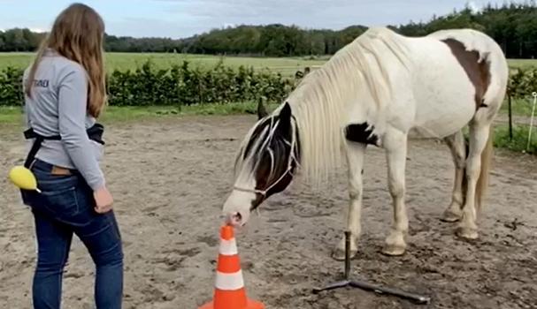 Paard trainen met stationary target