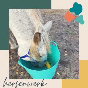 hersenwerk doen met je paard in de zomer