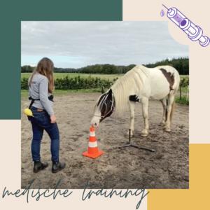 je paard helpen bij angst voor de dierenarts of bekapper