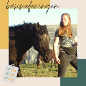 basisoefeningen clickertraining met je paard oefenen