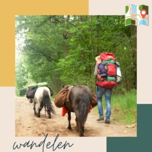 Wandelen met je paard is gezond voor beiden